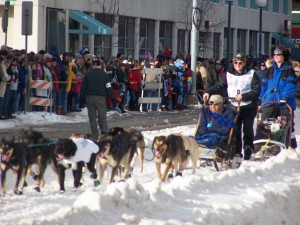 Iditarod musher on 4th Avenue
